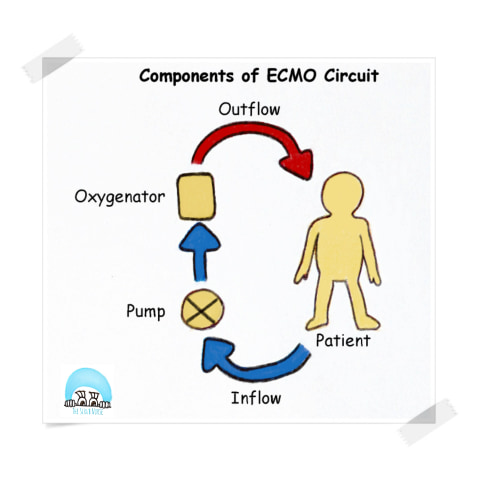 components of ecmo circuit new
